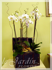 Five Stems Orchids Collection in Premium Le Jardin Treasure Chest Planter