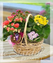 European Blooming Basket Arrangement