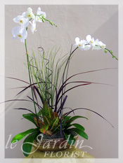Orchids & Live Plants :: a Signature Floral Arrangement